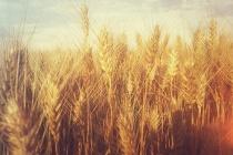 С Днем работника сельского хозяйства Украины!