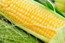 Cушка и транспортировка кукурузы в качанах